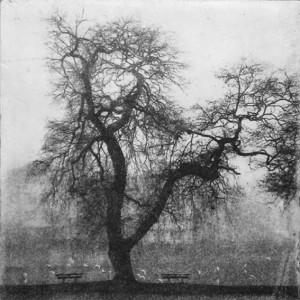 """""""Under trädet"""" - Fotopolymer av Eva Ax Riise."""